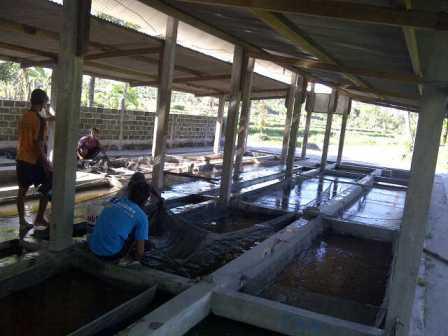 kolam penampungan ikan mas